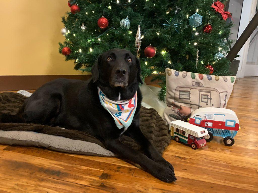 My Financing USA Office Dog Hasting